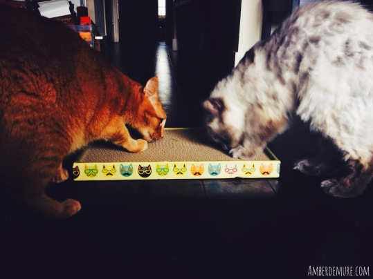 purr-packs-cat-gifts