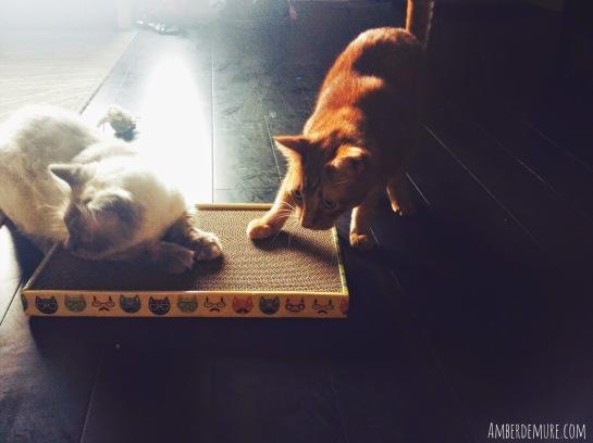 purr-packs-rufus-henry-cats