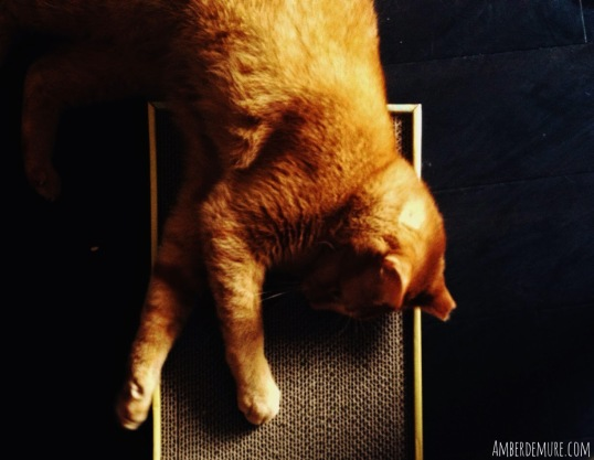 rufus-purr-pack-scratching-board